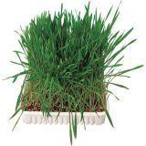 Gras- & Salatsamen