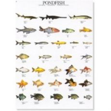 Poster Teichfische