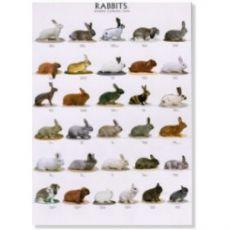Poster Kaninchen 1