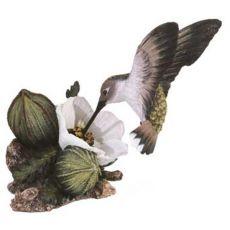Costa Kolibri Calypte costae