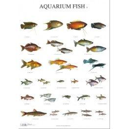 Poster Aquarium Fisch 3
