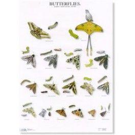 Poster Schmetterlinge 2