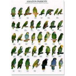 Poster Amazonen