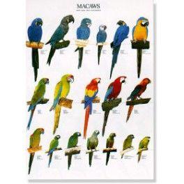 Poster Aras