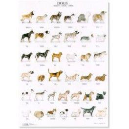 Poster Hunde 2