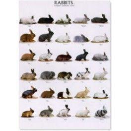 Poster Kaninchen 2
