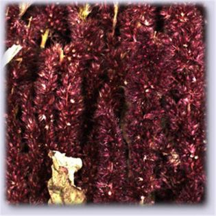 JR Birds Amaranth 30 g