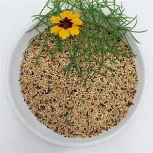 Bird-Box Grassittichfutter 1 kg