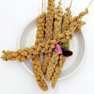 Bird-Box Kolbenhirse gelb China 1 kg